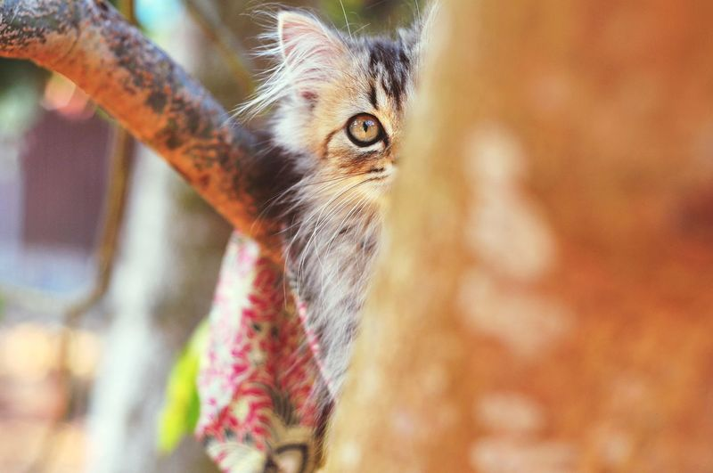 Animal Eye Cats Of EyeEm Animal Themes Persian Cat  Cat Lovers Cats 🐱 Cat Kitten Kitten 🐱 Close-up Animal Leg