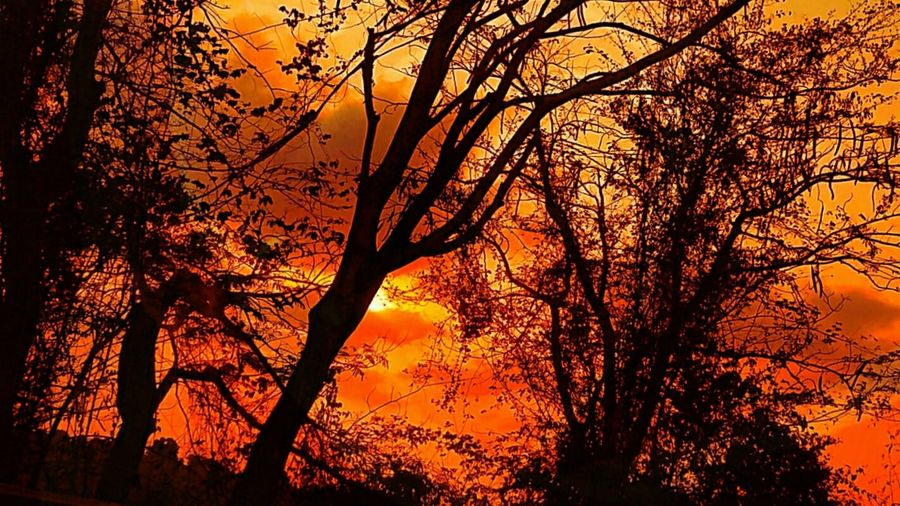 Is.... mY.. suN... seTtinG... fiRinG... aLL... aRouNd.. mE... Sunset Nature Orange Color Tree Beauty In Nature Silhouette Outdoors Branch Scenic No People Alone Expressions Silouette & Sky Lonely In My Point Of View Fine Art Low Angle View Sky Tranquil Scene Tranquility Dramatic Sky Backgrounds Forest