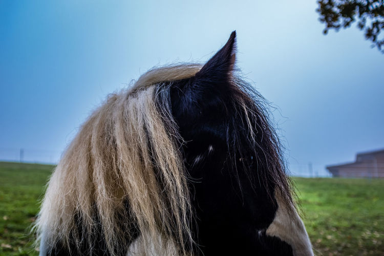 Close-up of pony on field against sky
