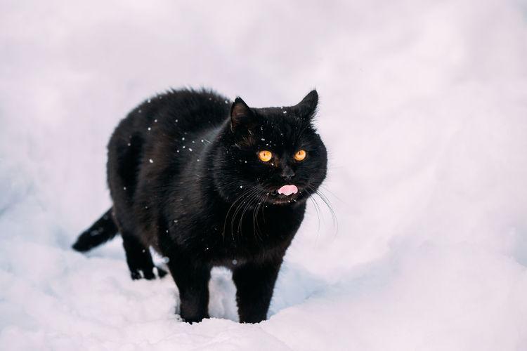 Black cat in snow on field
