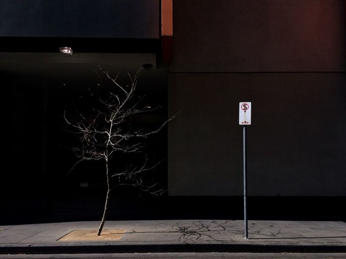 Bare Tree And Road Sign On Sidewalk