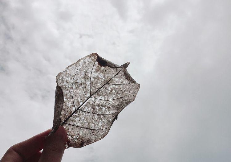 Close-up of hand holding umbrella against sky