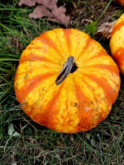 Halloween Pumpkin Squash - Vegetable Rotting Gourd Fruit Autumn Field High Angle View Rotten