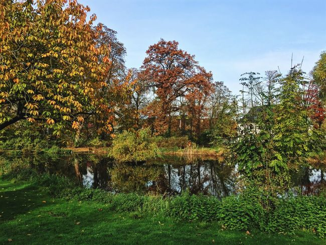 Alme Auen Park in Büren Tree Nature Growth Beauty In Nature Autumn No People Grass Sky Outdoors Tranquility Green Color Water Day Tranquil Scene Scenics Forest Plant Leaf Landscape