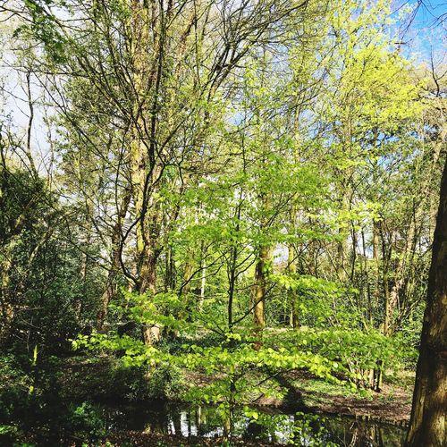 Tree Green Plants 🌱 Beatiful Amsterdam Green Green Green!
