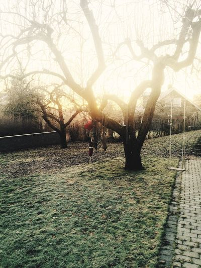 Winter Frost Tree Lawn Swing