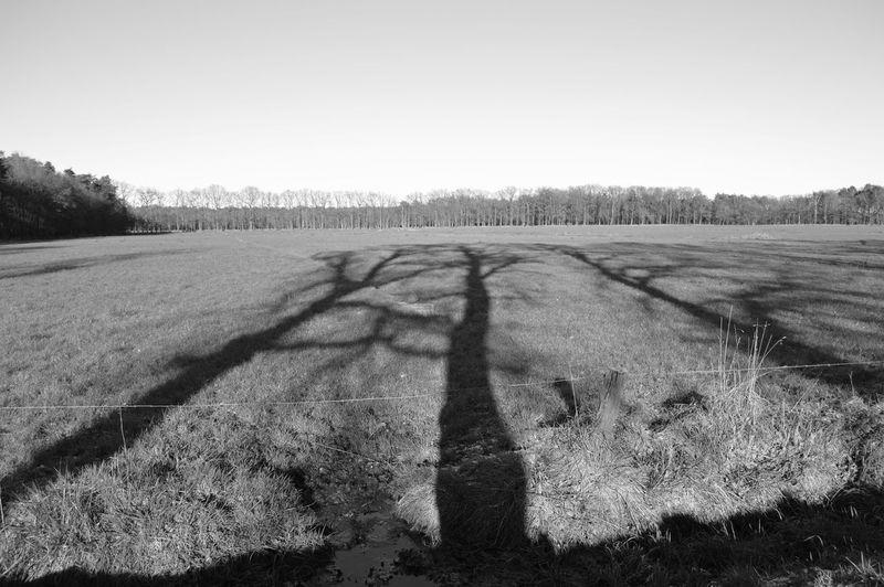 Bomenschaduw