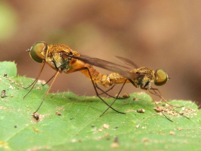 insects are