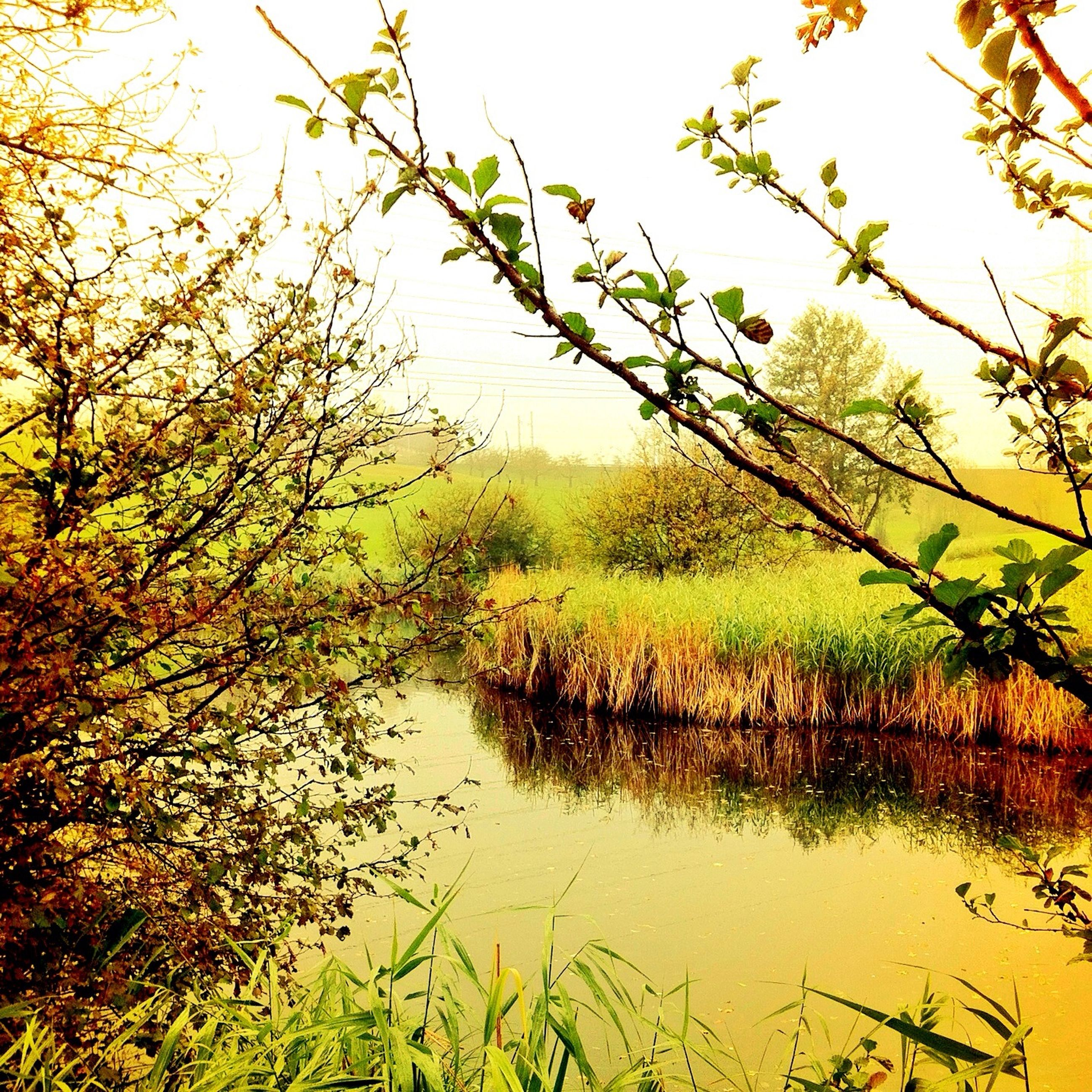 tree, tranquility, water, tranquil scene, beauty in nature, scenics, lake, growth, nature, branch, reflection, sky, clear sky, idyllic, plant, green color, yellow, day, outdoors, landscape