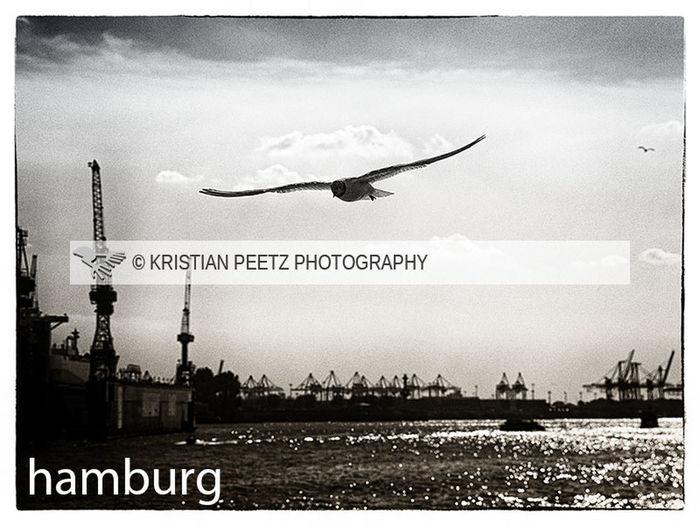 port of hamburg Hamburg EyeEm Best Shots Eyem Best Edits Eyem Hamburg