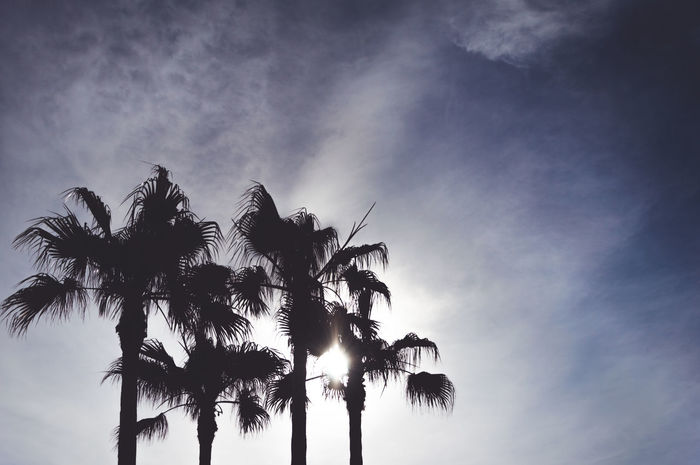 Palm Trees Palm Palms Trees Sky Nature Sunlight Silhouette Silhouette Silhouettes Blue Blue Sky Black Shadow Travel Traveling SpookyLight And Shadow Dark Darkness And Light Backlight Backlit First Eyeem Photo Spooky Atmosphere Showcase June