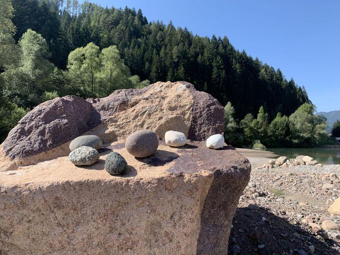 Solid Rock Tree