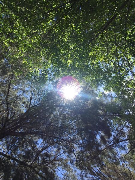 No God... Tree Sun Low Angle View Nature Growth Sunlight Lens Flare Beauty In Nature Tranquility No People Day Sky
