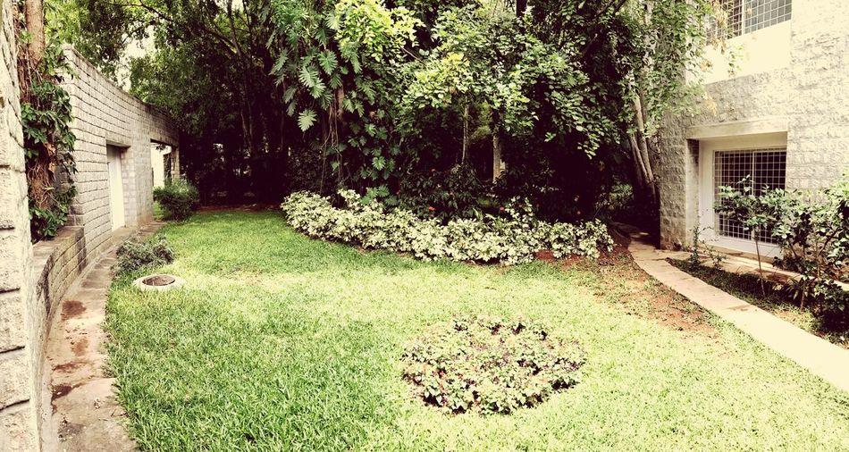 Nature Photography Greenery Garden Photography First Eyeem Photo EyeEmNewHere