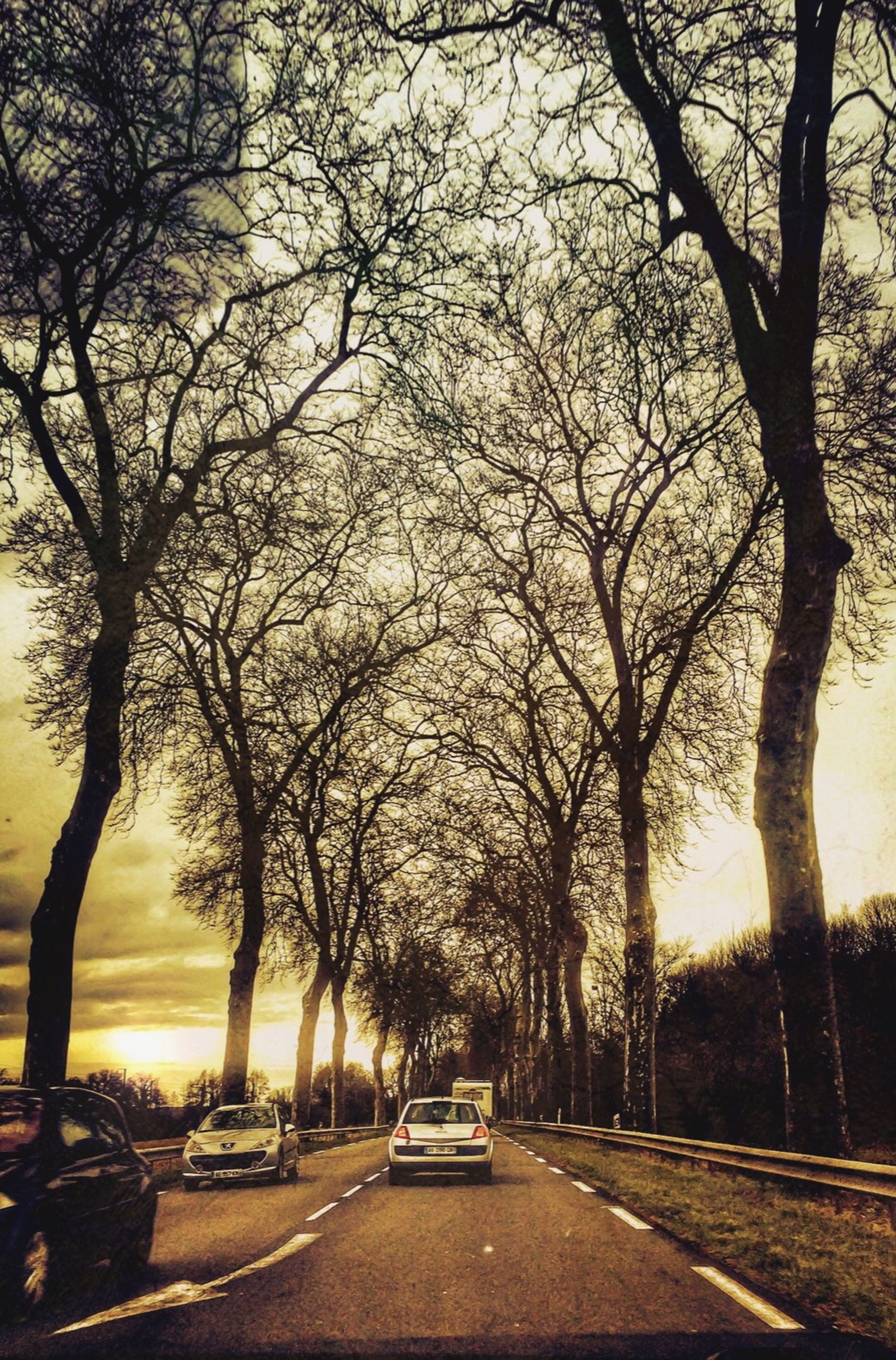 tree, transportation, the way forward, road, car, bare tree, street, land vehicle, mode of transport, treelined, branch, diminishing perspective, tree trunk, vanishing point, sunset, nature, empty, sky, tranquility, outdoors
