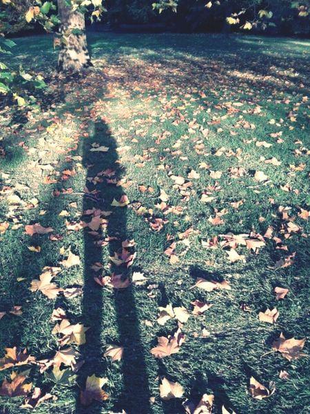 Green&Gold. Colors Of Autumn Goldener Oktober