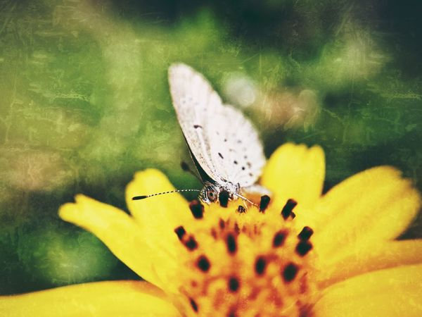 Butterfly on flower. Butterfly - Insect Nature Beauty In Nature Animals In The Wild Flower Macro Macro Photography