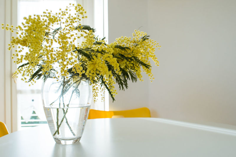 Bouquet Calm Close-up Day Decor Flower Flower Arrangement Flower Head Fragility Home Home Interior Indoors  Kitchen Little Things Mimosa Minimal Natural Light No People Pitcher - Jug Table Vase Window Yellow Yellow Flower