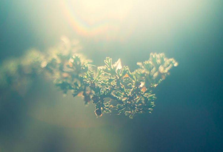 Abstract close-up of plant against bright lens flare