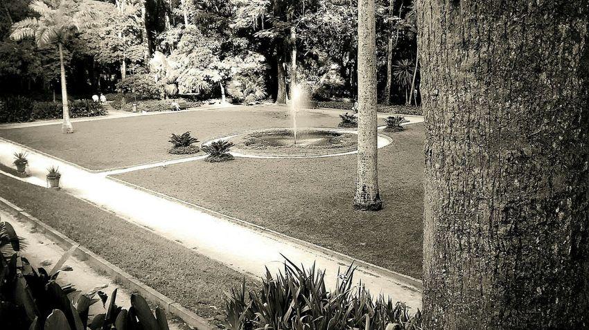 Garden Pretoebranco Blackandwhite Jardim Sunnyday Ensolarado Fotor Motog Mobilephotography