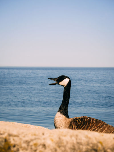 View of bird by the sea