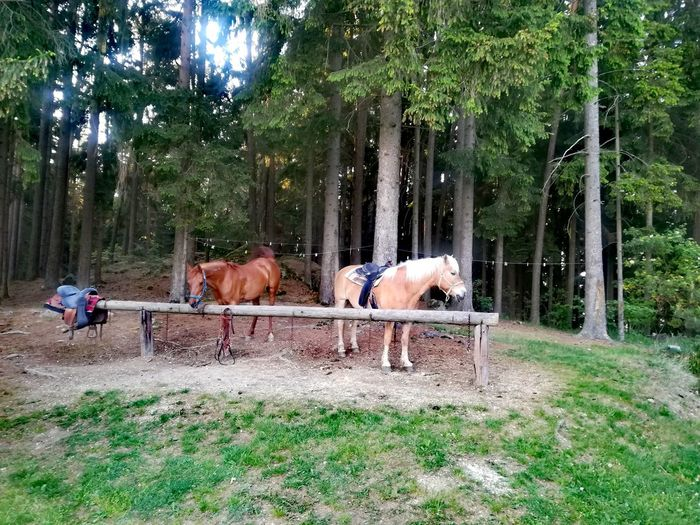 Riding Stop Riding Trails Horse Trekking Horse Treking Horse Trekking Guide Tree Grass Livestock Sky Green Color Working Animal Ranch Horseback Riding