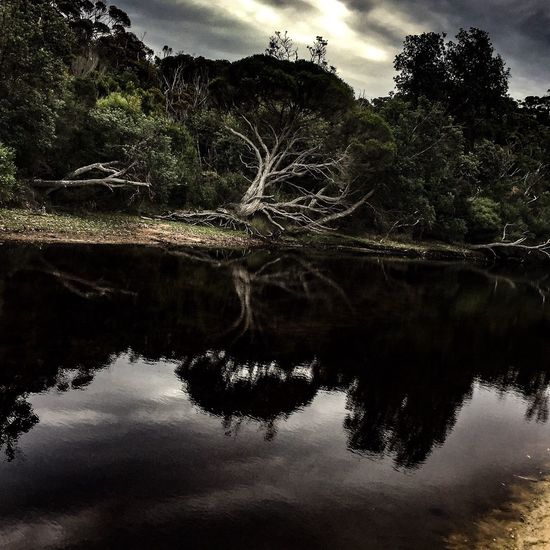 Seal Creek Photographic Approximation Camping At Mallacoota Blind Observatory Free Yourself From Yourself