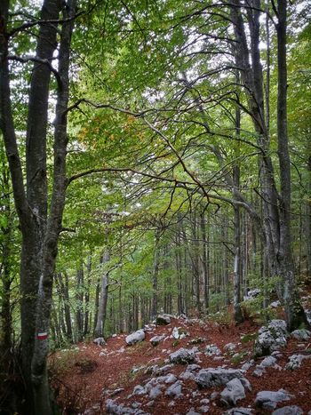 Deep woods hiking Travel Italy Pordenone Piancavallo Mobile Photography Art Fineart Scenic Landscapes Deep Woods Hiking Dead Leaves