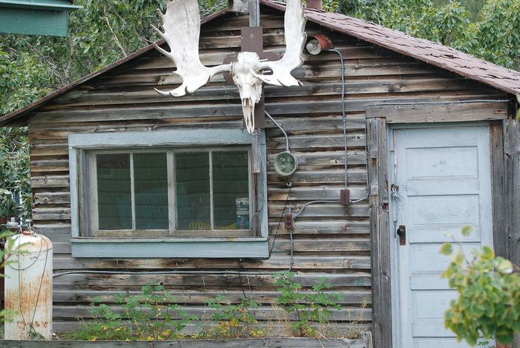 Yukon gold mining home from 1800 in carcross village Gold Miner Cabin Yukon Gold Rush Trail Bennett Lake Cabin At The Lake Horns Moose Head