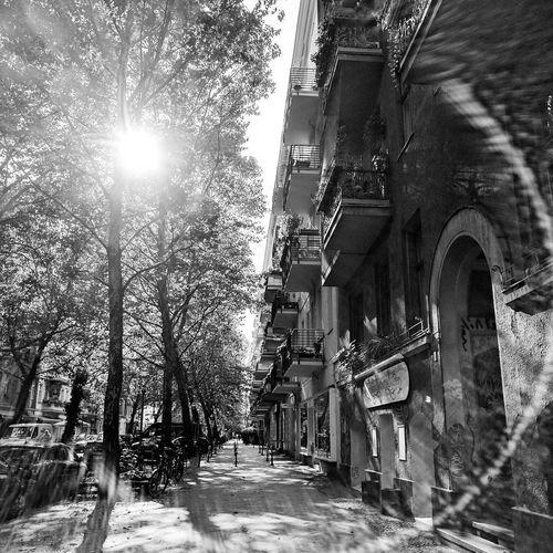 Sunlight City