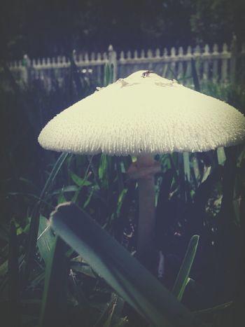 mushroom. Nature_collection