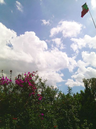 With my head in the clouds. ImBack Clouds Flowers Green Blue Sky Chasinglife