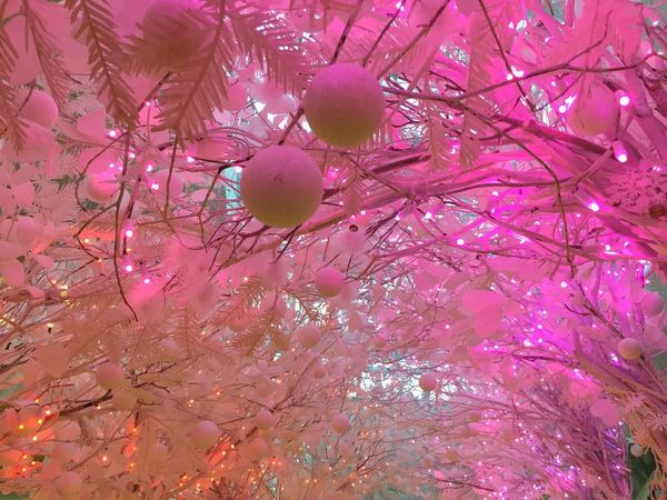 White Background Christmas Christmas Tree Christmas Lights Christmas Decoration Pink No People Celebration Pink Color Low Angle View Full Frame Tree Beauty In Nature Close-up Fragility Branch