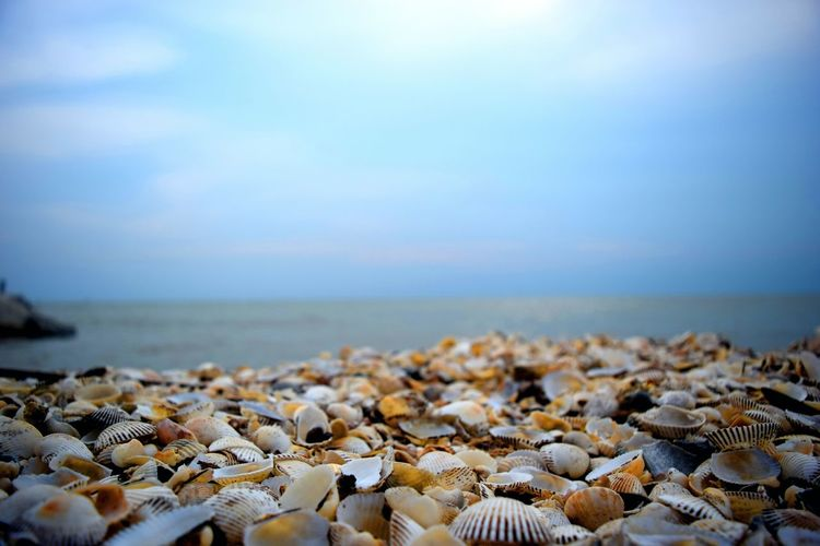 Surface Level View Of Seashells On Shore Against Sky