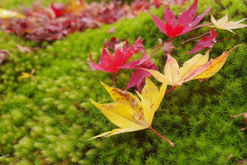 Leaf Autumn Change Nature Green Color Grass Plant No People Day