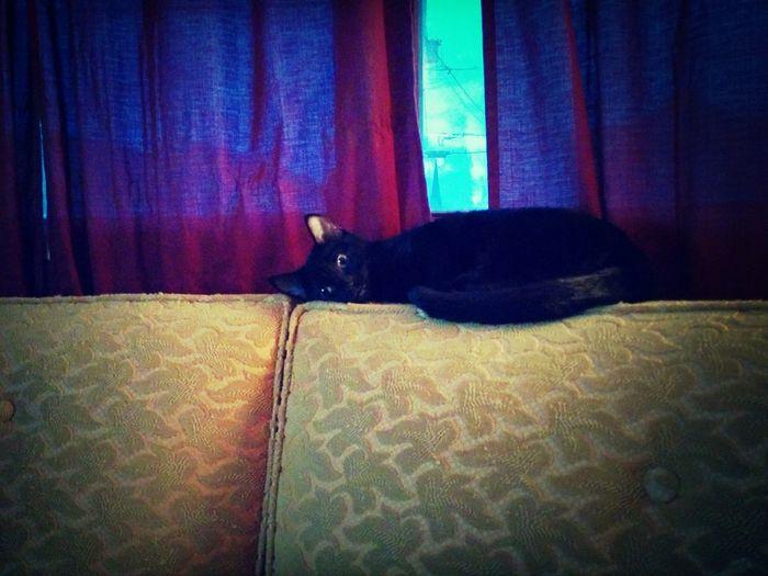 Kowolski Kitten Lounging Black Cat Pastel Power