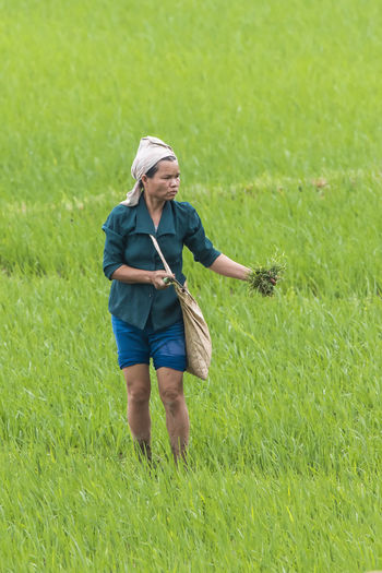 Woman working a a rice paddyfield HUAWEI Photo Award: After Dark Adult Casual Clothing Day Field Front View Full Length Grass Green Color Growth Holding Land Leisure Activity Lifestyles Nature One Person Outdoors Plant Real People Women