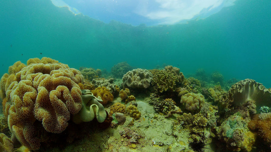 Panoramic view of coral in sea