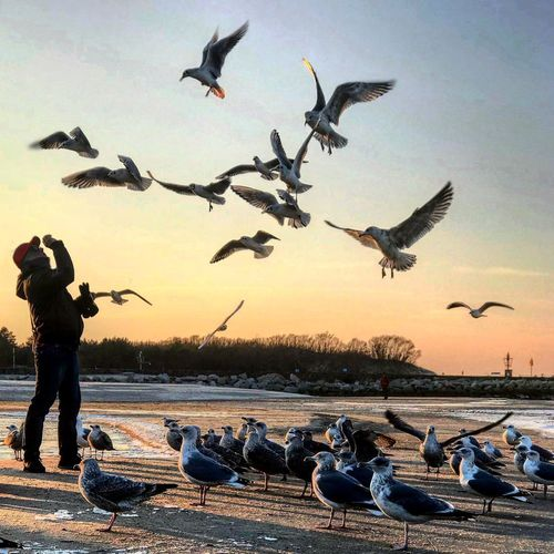 Bird feeding on the beach. Right moment right time. Animal Themes Large Group Of Animals Animals In The Wild Flying Animal Wildlife Seagull Beach Sea Bird First Eyeem Photo