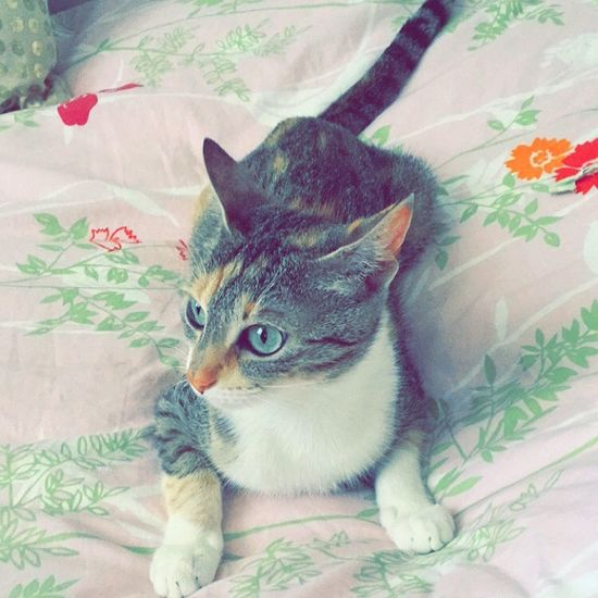 Cat Chat Cannelle Miaou Meow 🐱 Baby