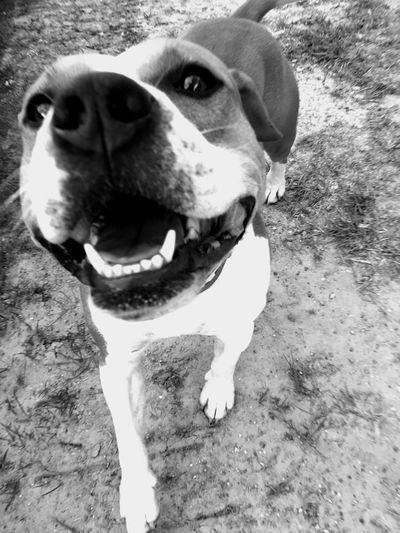 Dog One Animal