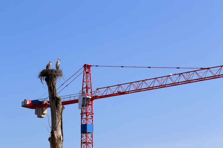 Low Angle View Of Storks In Next By Crane Against Clear Sky