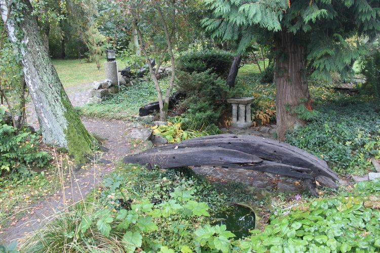 Zen Zen Garden