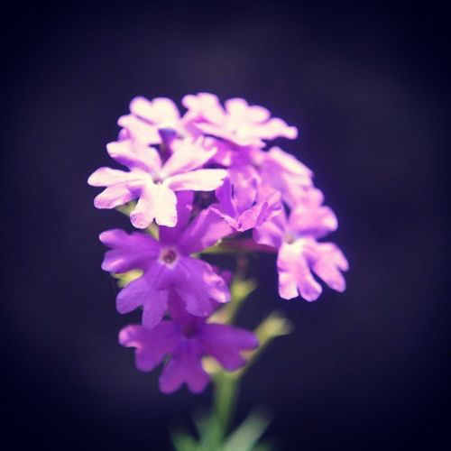 Violet Flower Instaphoto Instalike_for_the_photo . Follow_For_The_Photo ...