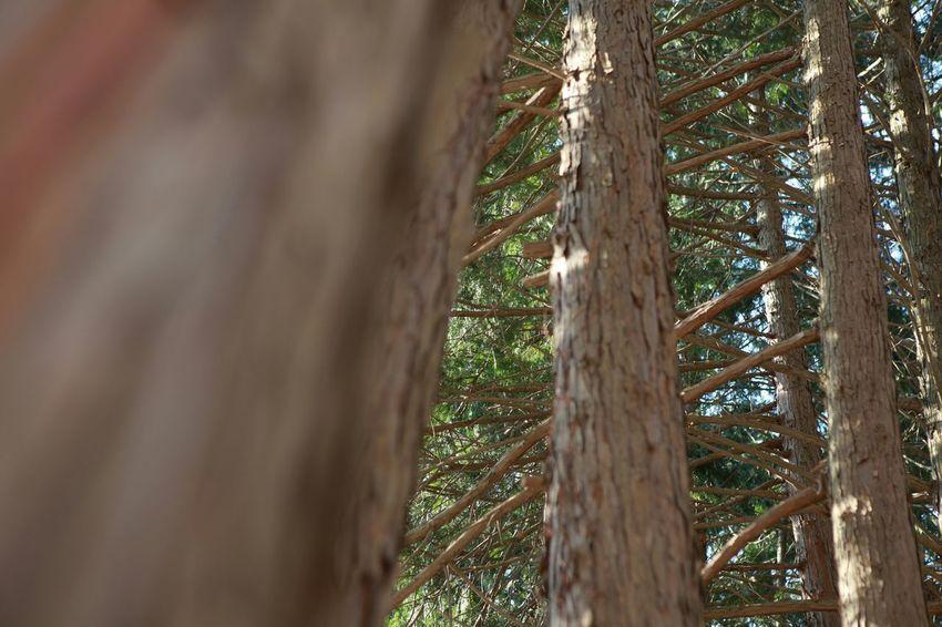바른생태살림원   Trees In The Forest Just Smile  Slowlife be the Nature