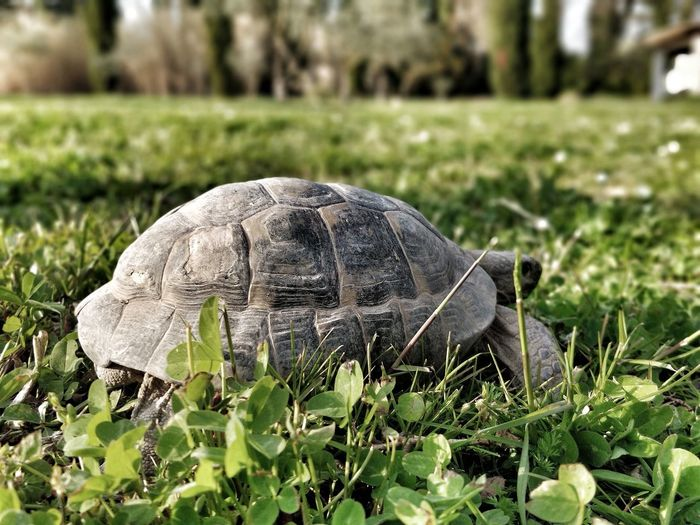 Close-up of a turtle in the field