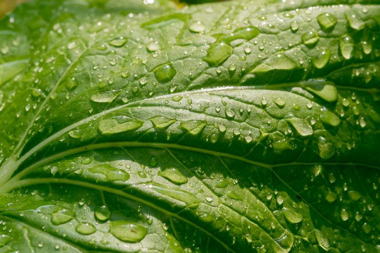 Drop Water Wet
