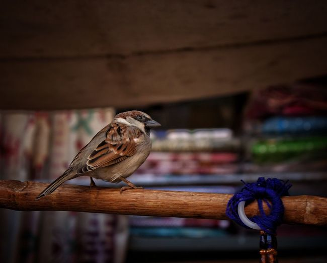 EyeEm Selects Bird Photography Birds in street