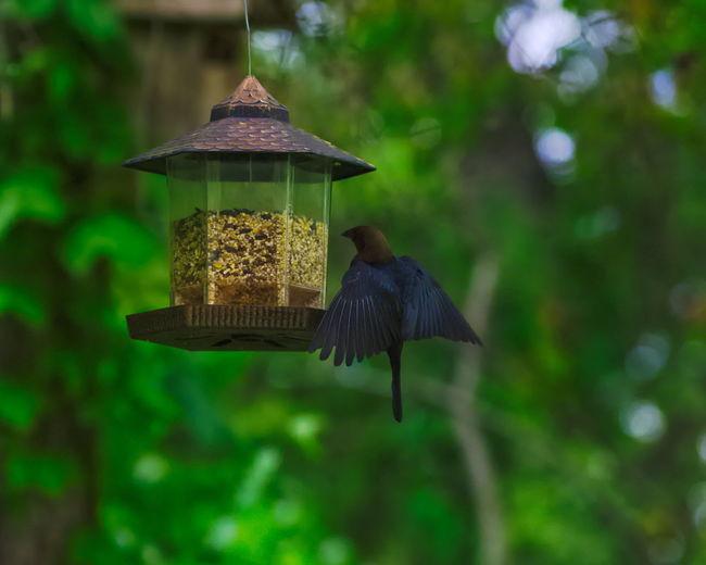 Birds flying Bird Photography Bird Birds Birds_collection Cow Bird