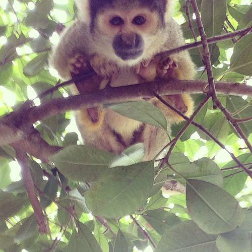 Monkey Londonzoo London Zoo